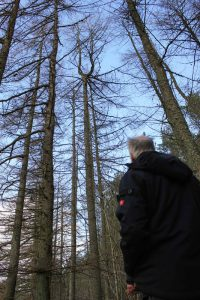 Willie Dobie & 'tuning fork' larch to be used for our longest - 6.7m beam